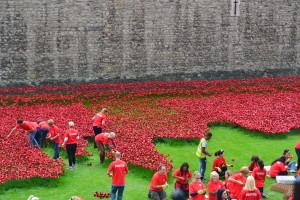 Der plantes valmuer så langt øjet rækker ved Tower of London.