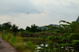 En stribe af flagermus tegnes henover himlen.